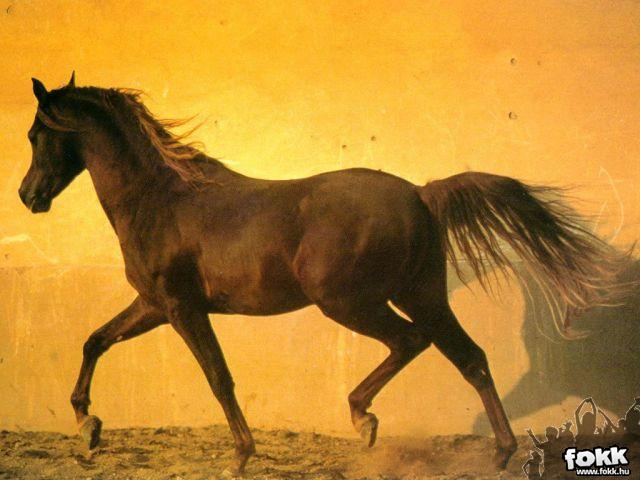 legszebb lovas idézetek A legszebb képek   lovakvilága
